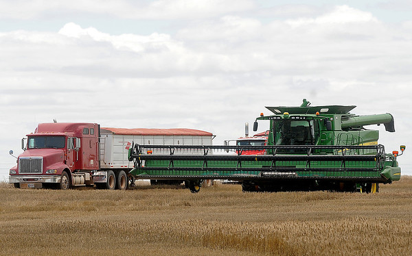 Combines, like the one shown, sit idle in a wheat field on S. 16th Street Monday, June 9, 2014. With the recent rains, harvest across Garfield County has stalled. (Staff Photo by BONNIE VCULEK)