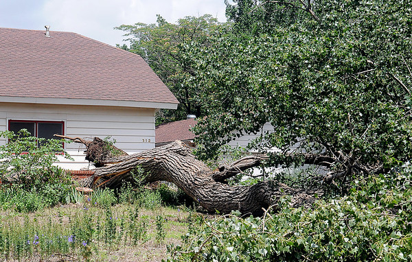 A large cottonwood tree in the front yard at 312 Kesterfield was uprooted as a gust front with sustained high winds moved through Enid and across Garfield County during a severe thunderstorm early Thursday, June 12, 2014. (Staff Photo by BONNIE VCULEK)