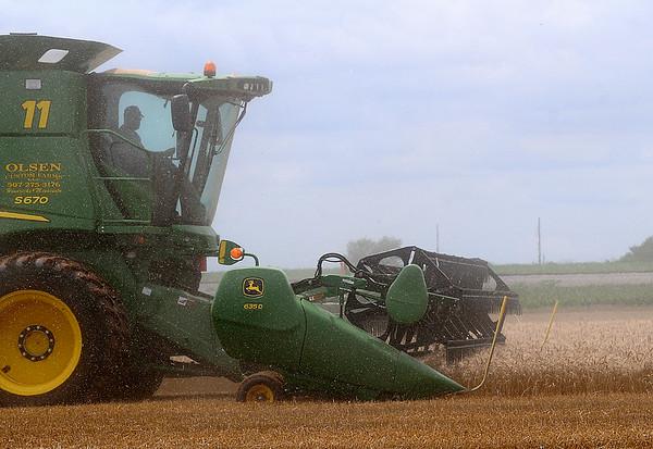 Dust flies through the air as an Olsen Custom Farms employee, from Hendricks, Minnesota, harvests wheat along U.S. Highway 81 north of Waukomis Tuesday, June 24, 2014. (Staff Photo by BONNIE VCULEK)