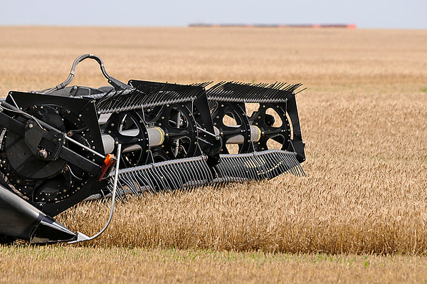 The header of a combine as it harvest a wheat field along east Market St. Wednesday. (Staff Photo by BILLY HEFTON)