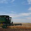 A combine harvest a wheat field south of Waukomis Thursday June 1, 2017. (Billy Hefton / Enid News & Eagle)