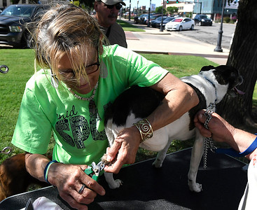 Suzan Rowley clips the nails of a dog during the Downtown Dogfest Saturday June 16, 2018 on the Garfield County Courthouse lawn. (Billy Hefton / Enid News & Eagle)