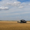A combine harvest a wheat field north of Enid Saturday June 16, 2018. (Billy Hefton / Enid News & Eagle)