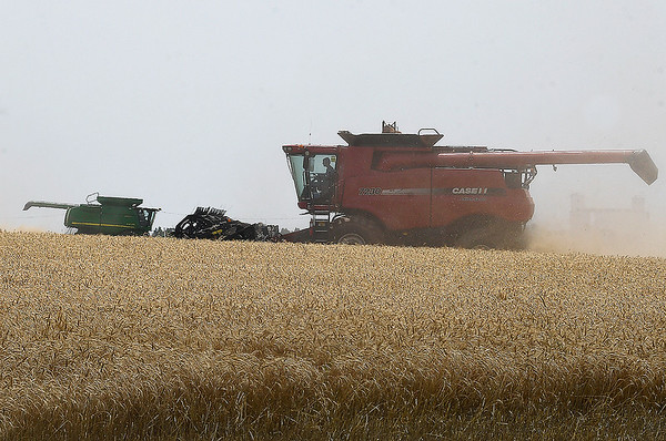 Combines harvest a wheat field north of Carrier Friday, June 14, 2019. (Billy Hefton / Enid News & Eagle)