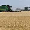 Combines harvest a wheat field south of Waukomis Wednesday, June 3, 2020. (Billy Hefton / Enid News & Eagle)