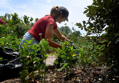 Sandy Lindsay, from Plants-A-Plenty, pulls weeds from a flower bed at Dillingham Garden Friday, June 26, 2020. (Billy Hefton / Enid News & Eagle)