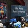 Old Paws Rescue Ranch Thursday, June 10, 2021. (Billy Hefton / Enid News & Eagle)