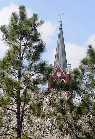 The steeple at St. Francis Xavier Catholic Church is framed by beautiful trees on  Good Friday, March 29, 2013. (Staff Photo by BONNIE VCULEK)