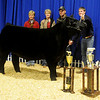 Colton DeMuth (back, right), the Blackwell FFA president, pauses for a portrait with his grand champion steer during the Northwest District Junior Livestock Show at the Chisholm Trail Expo Center Friday, March 8, 2013. A member of the Benda family (back, left) and DeMuth's parents, Lynn and Chris DeMuth, share the spotlight with Colton and two of his awards-the NWDJLS grand champion steer and the Benda Memorial Traveling trophies.  (Staff Photo by BONNIE VCULEK)
