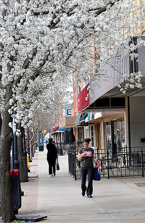 Amber Lindsey checks her phone as she walks under the blooming bartlett pear trees along Randolph St. Tuesday. Spring officially began with the vernal equinox at 6:02 a.m. this morning. (Staff Photo by BILLY HEFTON)