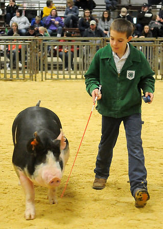 A young exhibitor drives his barrow around the show ring during the Northwest District Junior Livestock Show at the Chisholm Trail Expo Center Saturday, March 9, 2013. (Staff Photo by BONNIE VCULEK)