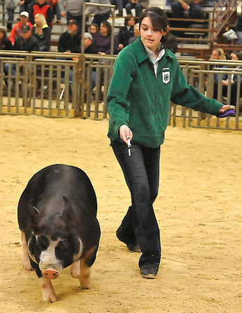 Madison Sanders shows her pig during the Northwest District Junior Livestock Show Sunday at the Chisholm Trail Pavilion. (Staff Photo by BILLY HEFTON)