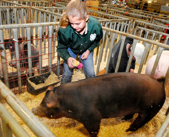 Lauryn Keller, from Medford, readies her pig for the show ring during the Northwest District Junior Livestock Show Sunday at the Chisholm Trail Pavilion. (Staff Photo by BILLY HEFTON)