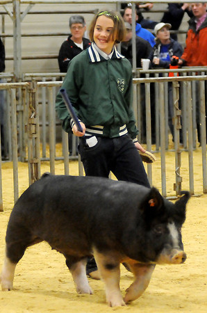 Aislyn King, from the Blackwell 4-H Club, drives her Class 4 Berkshire to a Reserve Champion ribbon during the Northwest District Junior Livestock Show at the Chisholm Trail Expo Center Saturday, March 9, 2013. King's barrow will be in Monday's premium sale. (Staff Photo by BONNIE VCULEK)