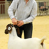 Karisa Pfeiffer, from Mulhall-Orlando FFA, smiles as she exits the show ring with her Grand Champion Doe goat during the Northwest District Junior Livestock Show at the Chisholm Trail Expo Center Thursday, March 7, 2013. (Staff Photo by BONNIE VCULEK)