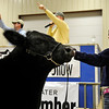 Cammi Gregory, of Cimarron, shows her grand champion steer during the premium sale at the Northwest District 80th Annual Junior Livestock Show Monday at the Chisholm Trail Expo Center. (Staff Photo by BILLY HEFTON)