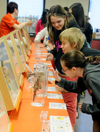 Waller Middle School students take a close look at several exotic insects from the Oklahoma State University Department of Entomology and Plant Pathology Tuesday, March 11, 2014. Andrine Shufran (top left), the Insect Adventure Coordinator, reassures students as they softly touch the insects. (Staff Photo by BONNIE VCULEK)