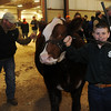 Colby Kokojan pauses with his cross-bred steer Jo Jo before he wins the reserve grand champion steer trophy during the Northwest District Junior Livestock Show at the Chisholm Trail Expo Center Friday, March 7, 2014. (Staff Photo by BONNIE VCULEK)