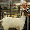 Taylor Parrish, from Kremlin-Hillsdale 4-H, prepares her goats for the 80th annual Northwest District Junior Livestock Show at the Chisholm Trail Expo Center Thursday, March 6, 2014. Parrish placed first with her Class II Doe Goat and won the showmanship award. (Staff Photo by BONNIE VCULEK)