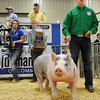 Caden Levings, of Perry, shows his grand champion barrow during the premium sale at the Northwest District 80th Annual Junior Livestock Show Monday at the Chisholm Trail Expo Center. (Staff Photo by BILLY HEFTON)