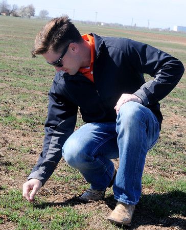 Brady Schultz, a sales representative from Johnston's Seed Company, inspects the growth of Riviera bermuda grass northeast of Enid Thursday, March 26, 2015. The new cold and drought tolerant sod will be available for sale around July 1. (Staff Photo by BONNIE VCULEK)
