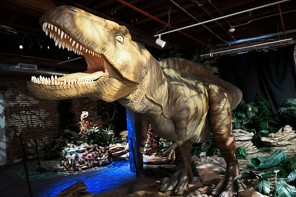 """An Acrocanthosaurus, the official dinosaur of the state of Oklahoma, is part of the exhibit """"Red Dirt Dinos: An Oklahoma Dinosaur Adventure,"""" at Leonardo's Children's Museum. The exhibit runs through September and is included in the general admission. (Billy Hefton / Enid News & Eagle)"""