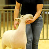 Livestock Show JaLeigh Oldenburg