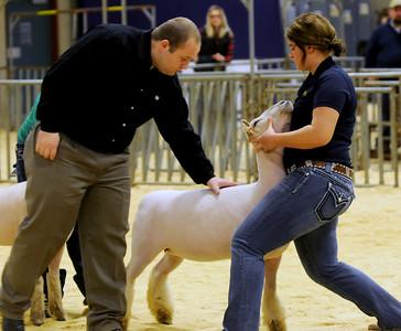 Livestock Show JaLeigh Oldenburg