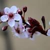 Moist Blooms