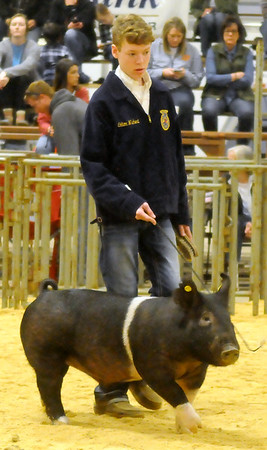 Livestock Show Swine