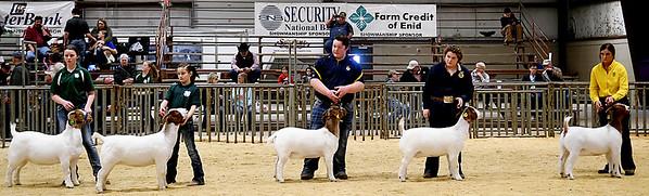 NWDJLS Doe Goats