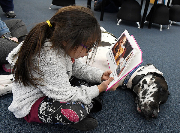 """Lucina Martinez, 6, reads to """"Doc"""", a Harllequin Great Dane, at the Public Library of Enid and Garfield County Wednesday March 6, 2019. (Billy Hefton / Enid News & Eagle)"""