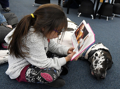 "Lucina Martinez, 6, reads to ""Doc"", a Harllequin Great Dane, at the Public Library of Enid and Garfield County Wednesday March 6, 2019. (Billy Hefton / Enid News & Eagle)"