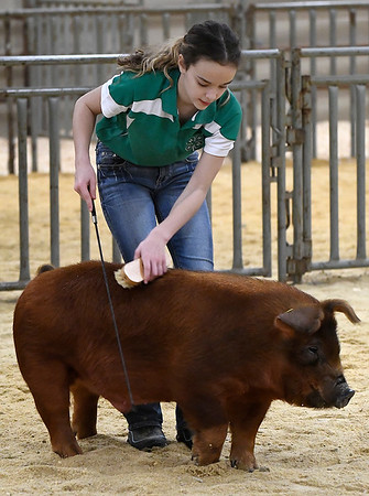 Jadyn Dystra, from Waukomis, shows her duroc pig during the Garfield County Junior Livetsock Show at the Chisholm Trail Expo Center Friday March 1, 2019. (Billy Hefton / Enid News & Eagle)