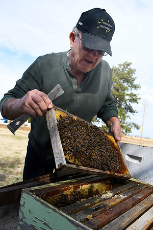 Jimmy Shobert pulls a frame of bees from one of his hives at his home near Laverne Tuesday March 19, 2019. (Billy Hefton / Enid News & Eagle)