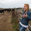 Linda Woodruff tals about her wagyu cattle during an interview at Silverwood Ranch southeaat of Enid Tuesday March 19, 2019. (Billy Hefton / Enid News & Eagle)