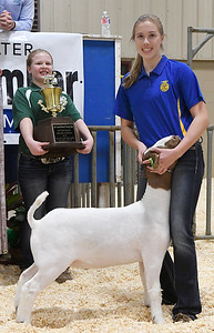 Audra Boyer, of Garber, shows her grand champion wether goat during the premium sale of the 85th Northwest District Junior Livestock Show Monday March 11, 2019 at the Chisholm Trail Expo Center. (Billy Hefton / Enid News & Eagle)