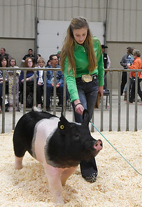 Anna Franke, shows her grand champion barrow during the premium sale of the 85th Northwest District Junior Livestock Show Monday March 11, 2019 at the Chisholm Trail Expo Center. (Billy Hefton / Enid News & Eagle)