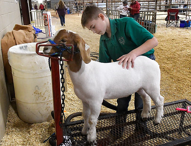 Colton Burns, of the Kingfisher 4-H prepares his goat for show at the 86th Annual Northwest District Junior Livestock Show at the Chisholm Trail Expo Center. (Billy Hefton / Enid News & Eagle)