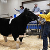 Weston Waldrep, from the Canton FFA, shows his Grand Champion Steer during the premium sale in the 87th Annual Northwest District Junior Livestock Show Monday, March 8, 2021 at the Chisholm Trail Expo Center. (Billy Hefton / Enid News & Eagle)