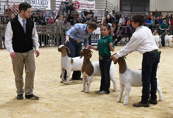 Clay Burson judges goats during the 87th Annual Northwest District Junior Livestock Show Friday, March 5, 2021 at the Chisholm Trail Expo Center. (Billy Hefton / Enid News & Eagle)
