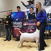 Audra Boyer, from the Garber FFA, shows her Grand Champion Wether Goat during the premium sale in the 87th Annual Northwest District Junior Livestock Show Monday, March 8, 2021 at the Chisholm Trail Expo Center. (Billy Hefton / Enid News & Eagle)