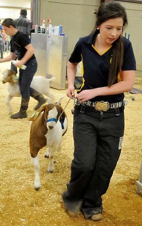 Livestock_Goats