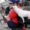 Tater gives her owner, Jennifer Holmes, a kiss as they ride Holmes new AmTryke during the 3rd annual AMBUCS Crawfish Boil at Jumbo Foods Saturday, May 18, 2013. Gerald Blevins (back, right) provided the funds for the AMBUCS AmTryke for Holmes, a 10-year Marine Veteran who was injured in a car wreck in 2009. (Staff Photo by BONNIE VCULEK)