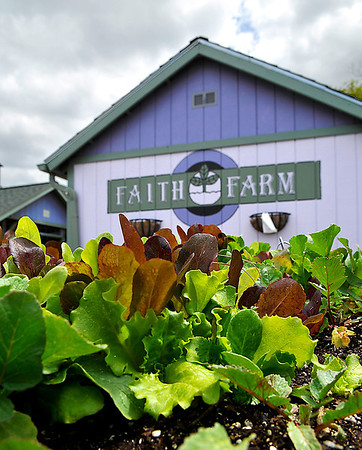A bed of baby greens at the Hope Outreach Faith Farm. The Hope Outreach Faith Farm will open it's Farmers Market today from 4 p.m. to 6 p.m. (Staff Photo by BILLY HEFTON)
