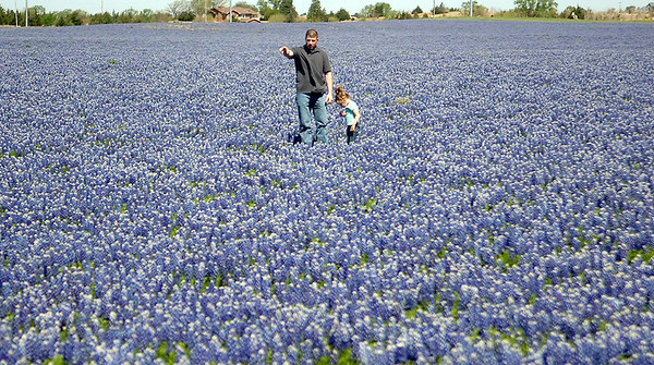 Micah Lenamond and his daughter, Reagan, explore a field of blue bonnets along Oakwood Road Saturday, May 3, 2014. Lenamond, who was raised in Texas, was happy to see the blue bonnets, the state flower of Texas. (Staff Photo by BONNIE VCULEK)