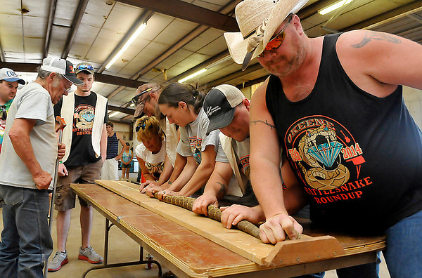 Volunteers work together to measure a snake at the 75th Annual Okeene Rattlesnake Round-up Sunday in Okeene. The winning snake measured 77 inches. (Staff Photo by BILLY HEFTON)