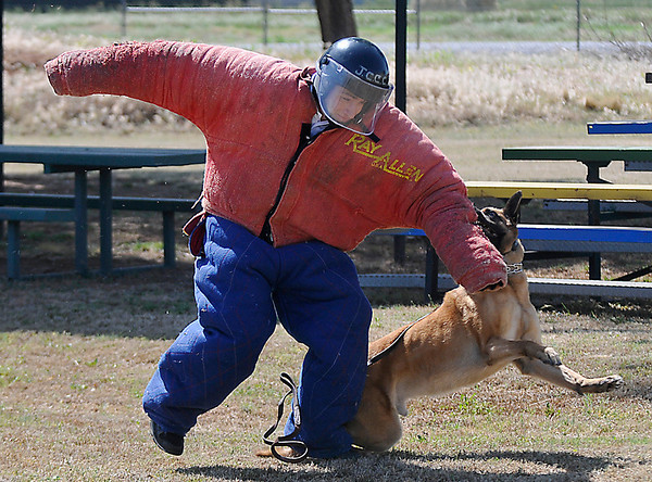 1st Lt. Daniel Venable is taken down by Duco, an Enid police dog, during the Enid Police Department's Citizens Police Academy Saturday. (Staff Photo by BILLY HEFTON)