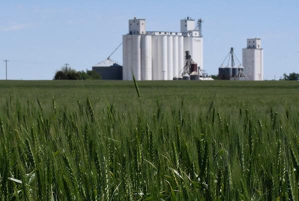 Wheat field near Carrier Tuesday May 2, 2017. (Billy Hefton / Enid News & Eagle)