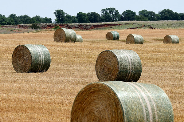 Round Bales of Wheat